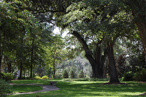 Live Oaks in Mount Pleasant